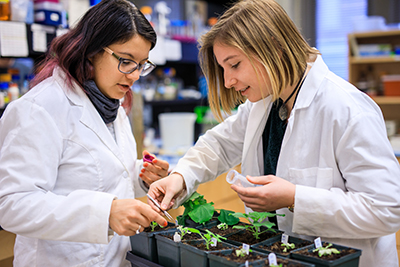Jessica Fernandez focuses her research on the roles of secondary metabolites produced by plants in regulating intercellular trafficking through the plasmodesmata.